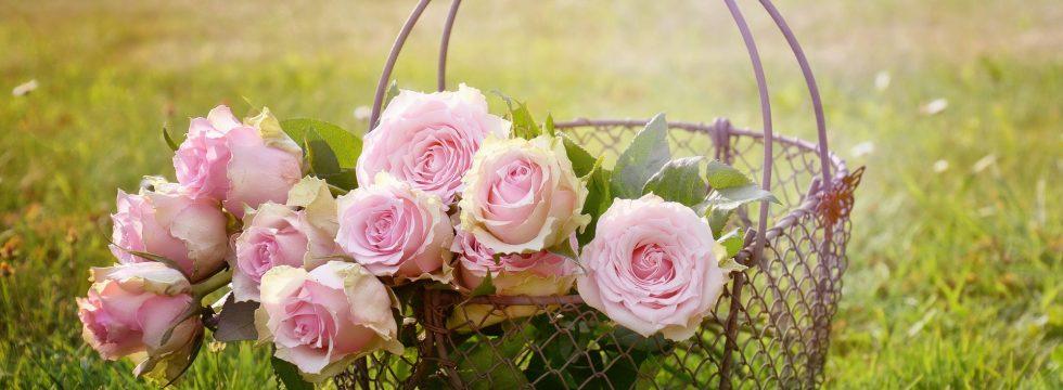 Rosenbalsam – Aus Dem Reich Der Pflanzenhelfer